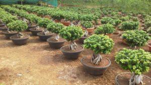 Hindi essay on plantation