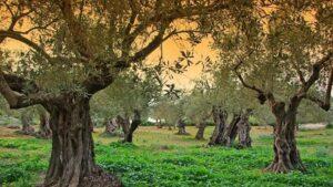 वन महोत्सव पर निबंध